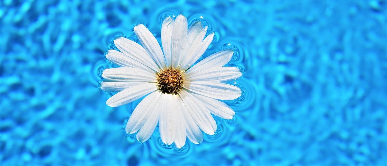 Květ v bazénu
