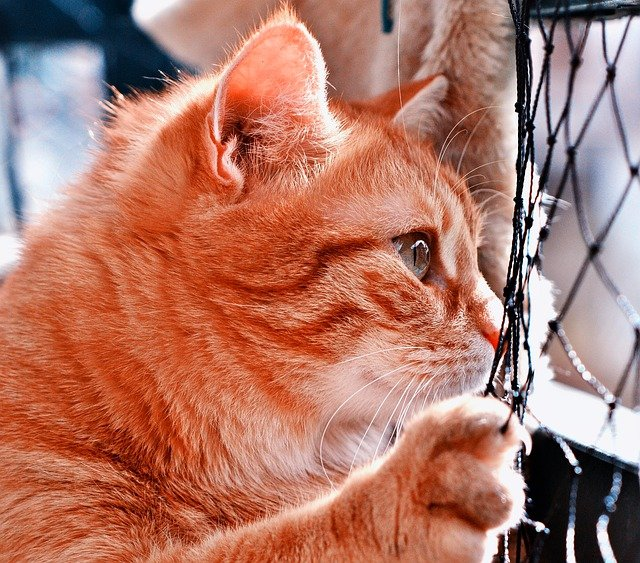 kočka u plotu